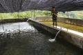 Triển khai mô hình nuôi cá hồi thương phẩm ở Chiềng Bôm