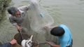Biện pháp kỹ thuật để hạn chế bệnh cá trong giai đoạn chuyển mùa