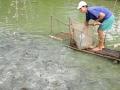 Đồng Tháp: Nhiều loại thủy sản ở giảm giá
