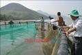 Mô hình thủy sản điểm: Hiệu quả nhưng khó nhân rộng