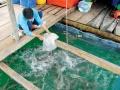 Một số bệnh thường gặp trên cá nuôi biển