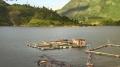 Điện Biên tìm hướng đi mới cho phát triển cá lồng trên hồ thủy điện Sơn La