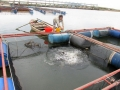Hà Tĩnh: Duy trì và phát triển nghề nuôi cá lồng bè