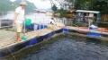 Nuôi cá lồng trên hồ Thác Bà ở Yên Bái