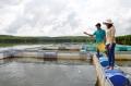 Người tiên phong nuôi cá lồng bè ở Cam Lộ