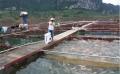 Sơn La phát triển mạnh nghề nuôi cá lồng trên hồ thủy điện