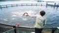 Kiên Giang: Phát triển nuôi cá lồng biển theo chuỗi liên kết sản xuất