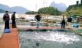 Tuyên Quang: Hỗ trợ kỹ thuật cho người nuôi cá lồng