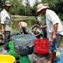 Hậu Giang: Nông dân xóa nghèo từ nuôi cá, trồng rau