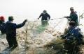 Nghệ An: Nuôi cá rô phi Đường Nghiệp trong lồng nhựa