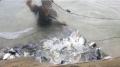 Nuôi cá rô phi VietGAP: Dễ làm, lãi cao, thị trường