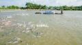 Tiền Giang đặt mục tiêu tăng sản lượng thủy hải sản gần 19%
