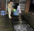 Hộ nuôi cá tra nhỏ lẻ phải bỏ nghề