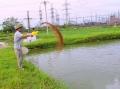 Thành phố Vinh nuôi đặc sản cá trắm đen