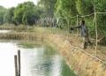 Người nuôi cá trê vàng đang lỗ đến 70 triệu đồng/1000 mét vuông