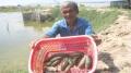 Quảng Ngãi triển khai mô hình nuôi hải sâm
