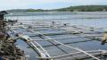 Hải sản đầm Ô Loan hồi sinh sau bão