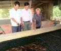 Quy trình nuôi lươn không bùn lãi ròng 300 triệu một năm