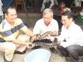 Về Tam Nông xem... cá, rắn, lươn...