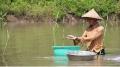 Nông dân hào hứng nuôi sò huyết trong vuông tôm