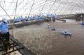 Bạc Liêu: Phát triển nuôi trồng khai thác thủy sản bền vững