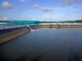 Xây dựng quy hoạch Cà Mau thành vựa tôm lớn nhất cả nước