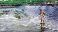 Cà Mau: Chuỗi liên kết giá trị ngành hàng tôm chưa bền vững