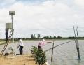 Nuôi tôm càng xanh thích ứng với biến đổi khí hậu ở An Giang