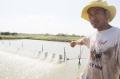 """Sản xuất """"bẩn"""" tại đồng bằng sông Cửu Long: Bơm tạp chất, """"thổi"""" lớn tôm"""