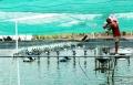 Đồng Nai: Kỳ vọng vào thủy sản
