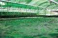 Xu hướng phát triển nuôi trồng thủy sản ở Nhật Bản