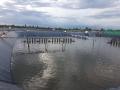 Khuyến cáo chỉ thả tôm giống biển ở những vùng có độ mặn trên 6 phần ngàn