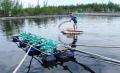 Nuôi trồng thủy sản ở các tỉnh miền trung