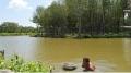 Tôm sinh thái nâng cao vị thế tôm Việt