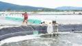 Thanh Hóa: Các mô hình sản xuất nông nghiệp hiệu quả kinh tế cao