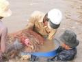 Bến Tre: Năm 2012 Thạnh Phú đạt 20.000 tấn nuôi thủy sản