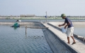 Giúp nông dân giảm thiểu tình trạng sản xuất nhỏ lẻ