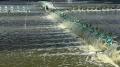 Thủy sản Ninh Bình khép lại một năm thắng lợi
