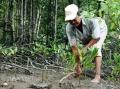 Câu chuyện nuôi tôm trong rừng đước của lão nông 70 tuổi