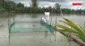 An Giang: Nuôi trồng thủy sản mất tiền tỷ vì dự án lấp kênh