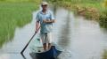 Phớt lờ quy hoạch, người dân tự ý ngập mặn đất lúa để nuôi tôm