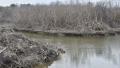 Nuôi trồng thủy sản khiến cây rừng chết hàng loạt