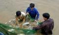 Thái Nguyên: Sản lượng thủy sản tăng 11%
