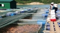 Huế: Nuôi trồng thủy sản ứng phó biến đổi khí hậu