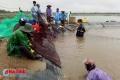 """Hà Tĩnh: Nuôi trồng thủy sản """"chạy đua"""" với bão"""