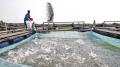 Trung Quốc: Thuế môi trường ngành thủy sản tạo ra hiệu ứng trái chiều