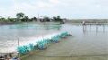 Giải pháp nuôi trồng thủy sản thân thiện với môi trường
