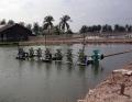 Tiền Giang: Khuyến cáo khung thời vụ thả tôm giống nước lợ năm 2016