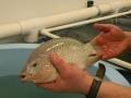 Nuôi cá không cần cá - thử thách mới của ngành thủy sản toàn cầu