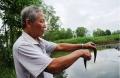 Báo động tình trạng tôm, cá chết ở vùng sông nước Cà Mau